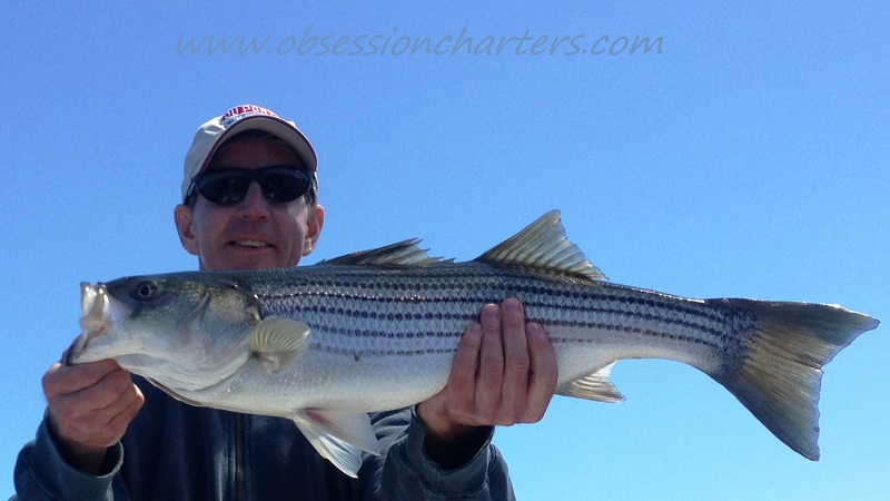 2013-stripedbass-mchaney