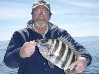 5325fee036256-2011-04-sheephead-jamison